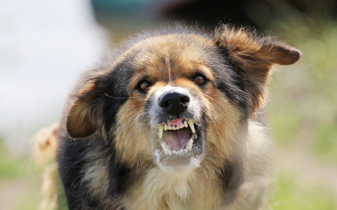 Una Breve Guía para Reclamos de Mordeduras de Perro en Texas